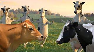 Funny Cow Dance 4 │ Nursery Rhymes & Kids Songs