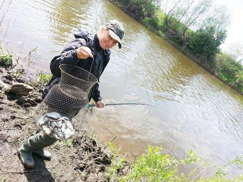 Видео ловля плотвы весной на удочку