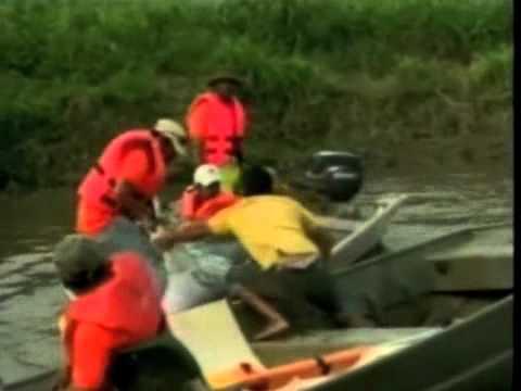 Rescatan a dos delfines de agua dulce atrapados en un rio en bolivia