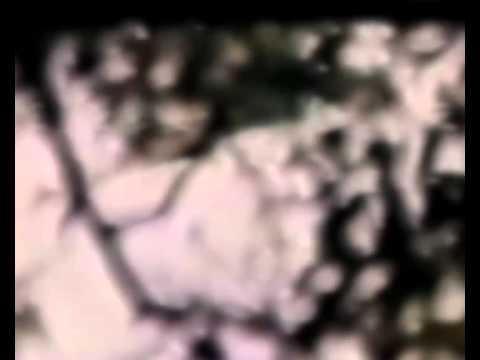 Unknown flying creature found on old VHS tape (Austria 1992)