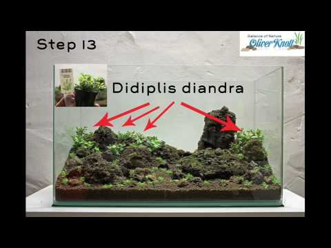 NatureSoil Step by Step Layout by Oliver Knott - Zoomark 2009