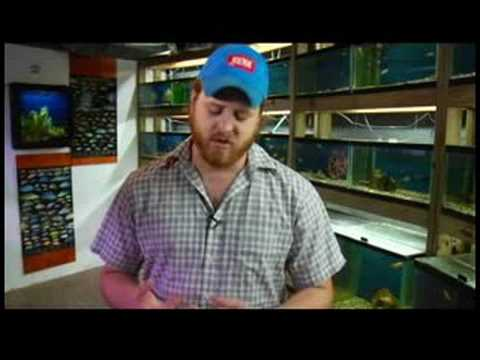 Pet Fish Care : How to Tell When a Saltwater Fish Tank Cycles