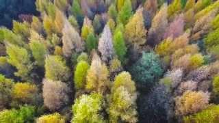 Zalacséb ősszel