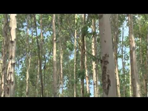 Tabasco, el edén deforestado