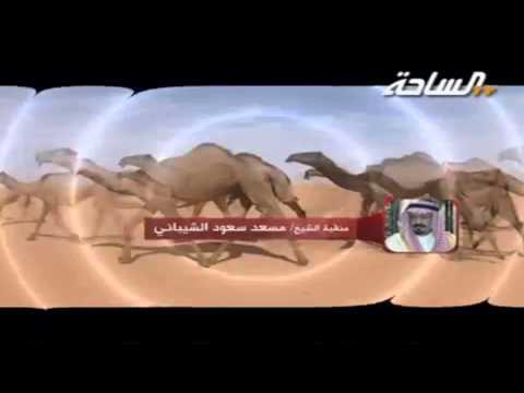 جديد 2015 الطايلات منقية مسعد سعود الشيباني كلمات سعد بن عبيد الشيباني اداء صوت الهيلا حاكم الشيباني