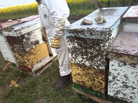 apicultura    rapita 2014
