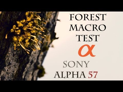 Forest Macro - Sony Alpha 57