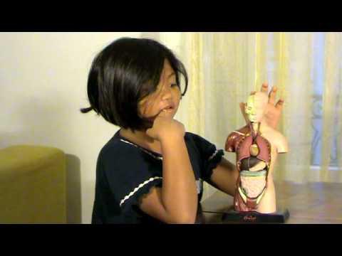 Prime lezioni di anatomia. Alla scoperta del corpo umano a sei anni.