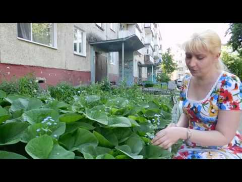 Бруннера купить в Москве