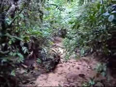 Barranquita: Deforestación afecta derecho al agua