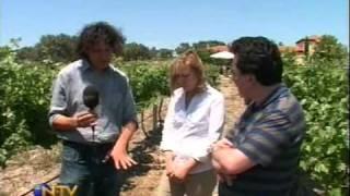 Vedat Milor Urlice Şarapları Ziyareti