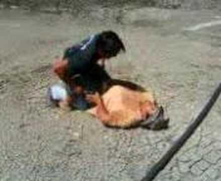Resultados Mujeres Cojiendo Con Animales A Teniedo Seo