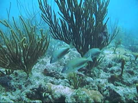 SCUBA Diving - Beach Dive off Hollywood Beach Florida