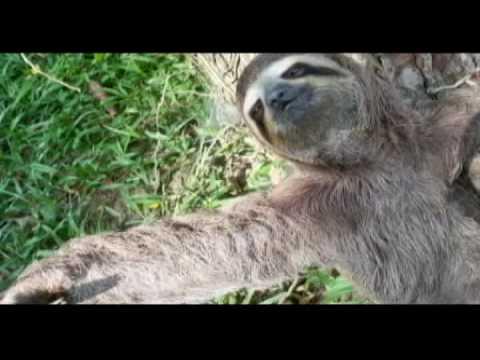 Selvas Andinas, Patrimonio de los Pueblos