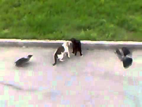 Epic Cat Fight (cat-s horror)