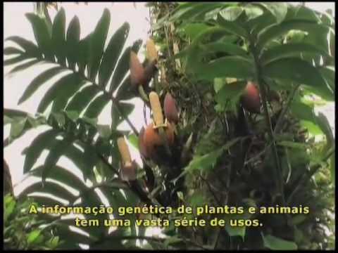 Vídeo oficial Dia da Biodiversidade - Legendado