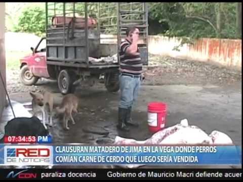 Clausuran matadero de Jima en La Vega donde perros comían carne de cerdo que luego sería vendida
