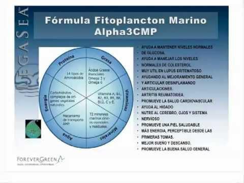 Lo que no sabías del Fitoplancton Marino