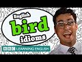 Bird Idioms - BBC Learning English (The Teacher)