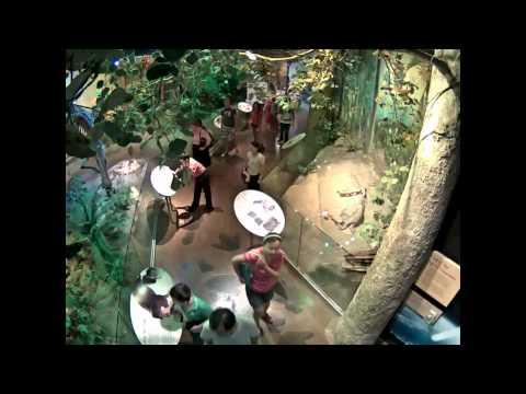 فيديو لـ كاميرات المراقبه تصور شاب يسرق تمثال . . من متحف