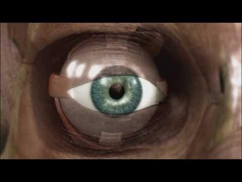 Il corpo umano: la VISTA