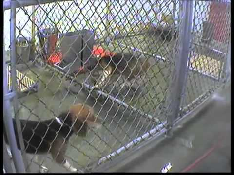 Official 2010 PETA Undercover Animal Testing Footage