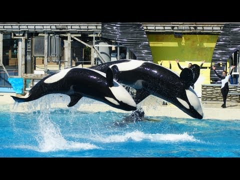 Shamu Believe (Full Show) at SeaWorld San Diego