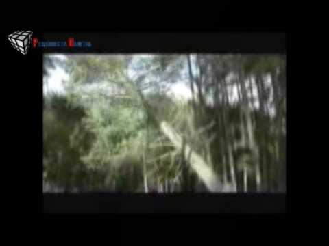 Cicatrices Ambientales: La deforestación