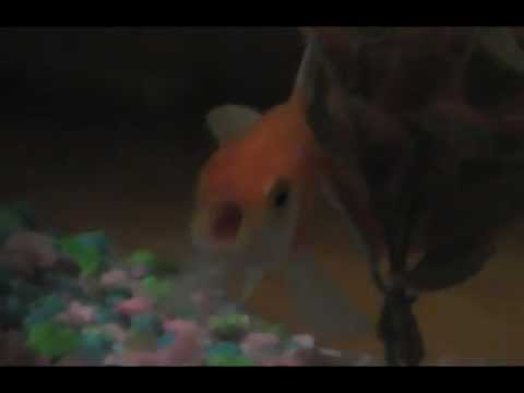 Goldfish Rapping To Busta Rhymes
