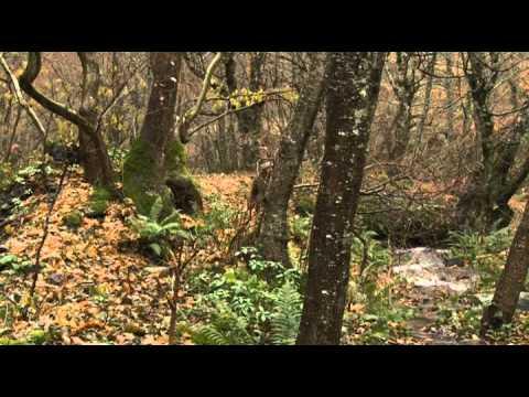 Doğada Tek Başına - Dağ Evi 3 Bölüm (22 02 2012)