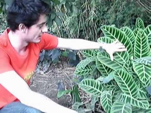 Recorrido plantas (3) - Parque La Presidenta. El Poblado
