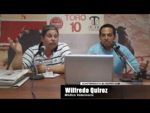 TORO TENDIDO 10 (17.11.14)