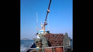 Fishery In South Korea II