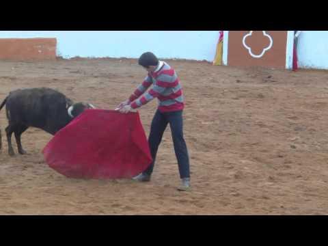 Segunda tienta del bolsin taurino mirobrigense 2015