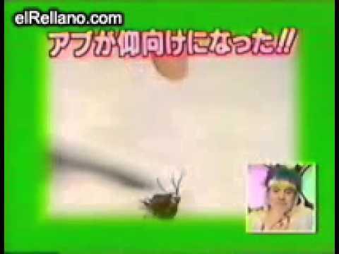 فيديو: شاهد افضل مدربه حشرات فى العالم