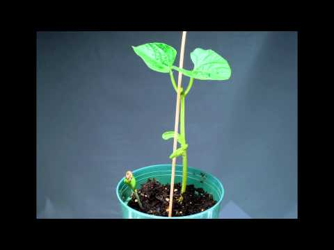 time lapse of Plant Growing -dxl5_uXqEGg