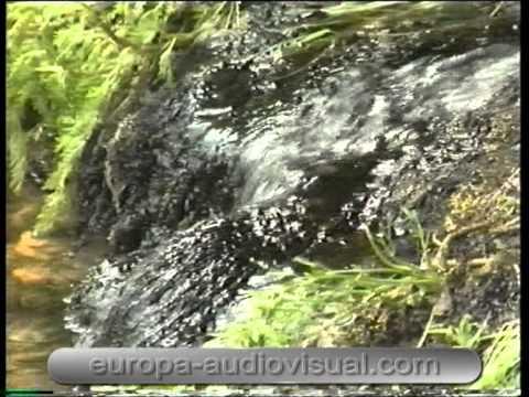Calidad medioambiental y gestión empresarial. [09]. Contaminación del suelo (*).
