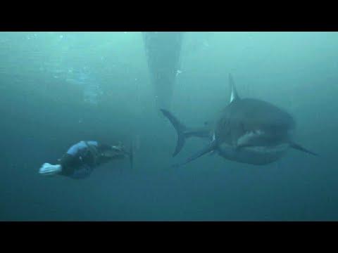 Видео: Майкл Фелпс аварга загастай уралдав