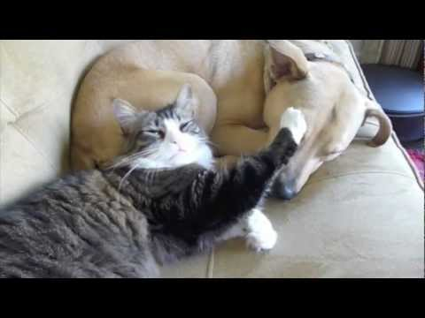 Cat Cuddles with Sleepy Dog