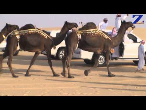 منقية  الزبدانيات  للسيد  ناصر بن راشد الشابل آل زبدان المري