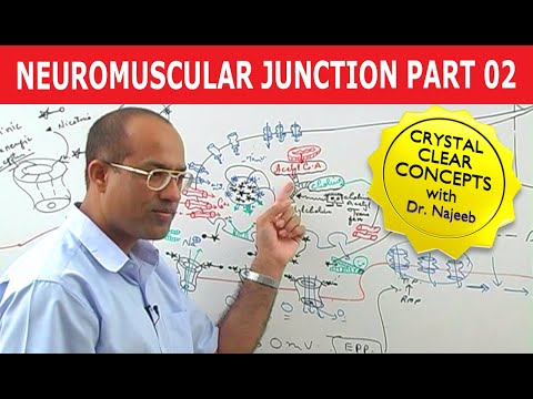 Neuromuscular Transmission 2/2 - Physiology Lecture - USMLE Step 1