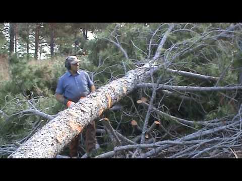 Desramado de arbol caído por el viento el pasado enero 2009