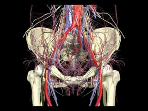 Anatomia Umana Femminile - Female Human Anatomy