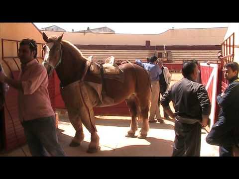 El arte de vestir un caballo de picador de toros
