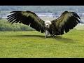 Самая большая птица в мире