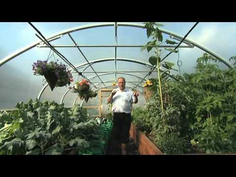 Automatic Irrigation inside a Polytunnel