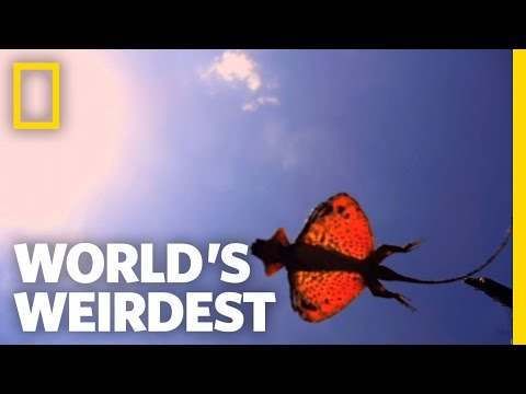 World's Weirdest - The Flying Dragon