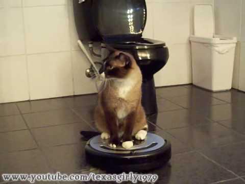 Mačka koristi usisavač