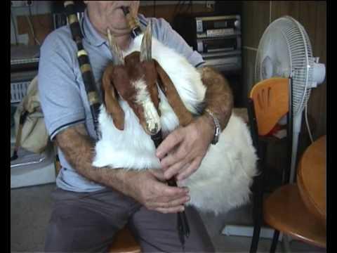 gaida gajda goat goat bagpipes Na Stojan Gosti mu dojdoa lele ????? ????? Risto Todoroski