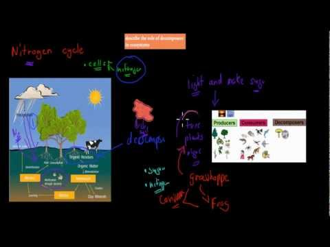 4. Role of decomposers (Preliminary biology)
